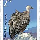 The Fauna of Bosnia and Herzegovina 1998 - White-headed Vulture