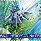 Flora 2020 - Moltkia Petraea