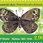 Fauna 2020 - Dalmatian Argus