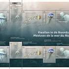 Medusas en el Mar del Norte