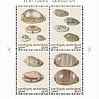 Shells Colour - (Saba)