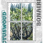 Forêt de Cactus - (Bonaire)