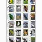 2018 Birds on Bonaire