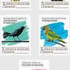 Oiseaux (Bonaire)