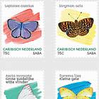 Papillons (Saba)