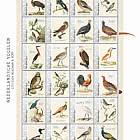 Birds 2021 (Bonaire)