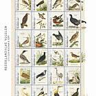 Birds 2021 (St. Eustatius)