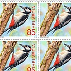 Animals of the Forest - (Great Spotted Woodpecker Sheetlet Mint)