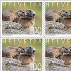 Animal Families - Marmot -  Sheetlet x10 Stamps Mint