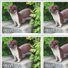 Animals In The City - Stoat Sheetlet x 10 Stamps - Mint