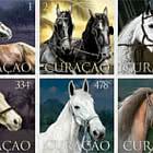 Cavalli a Curaçao
