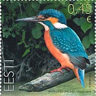 Bird of the Year - Common Kingfisher