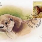Estonian fauna – otter (Lutra lutra)