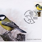 Bird of the year - Great tit
