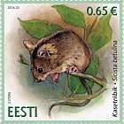 Estonian fauna - northern birch mouse