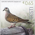 Bird of the Year - Turtledove