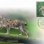 Estonian Fauna - The Lynx