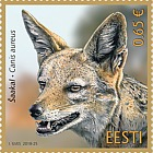 Estonian Fauna - Golden Jackal