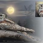 Pájaro del Año - El Nightjar Europeo