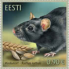Estonian Fauna – The Black Rat