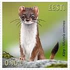 爱沙尼亚动物群 - 白鼬