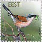Bird of the Year - Shrike