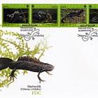世界自然基金会-大凤头蝾螈