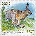 Estonian Fauna - European Brown Hare
