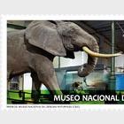 Museums - MNCC