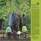 Flora - Historical Tree 'El Abuelo'