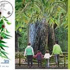 Flora - 历史树'El Abuelo'