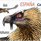 Europa 2019 - Birds - Bearded Vulture