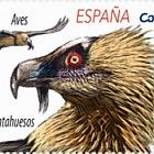 Europa 2019 - Birds - Bearded Vulture