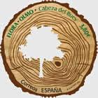 Flora - Elm - Cabeza De Buey