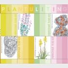 Natural Dye- (Sheetlet Mint)