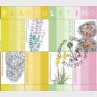 Natural Dye- (Sheetlet CTO)