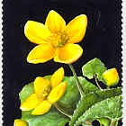 Faroese National Flower
