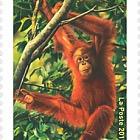 UNESCO 2017 - Orangutan