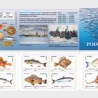 Seefisch