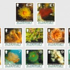 Definitive Coral & Anemones I