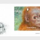 Endangered Species Sumatran Orangutan
