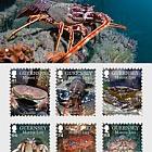 Marine Life II: Crustaceans- (PP Set)