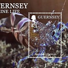 Marine Life II: Crustaceans