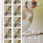 Europa 2019 - National Birds - Sheets of 10 80p Europa Value