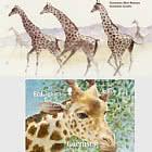 Endangered Species 2020 - Kodofan Giraffe