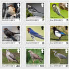 Guernsey Definitive - Birds