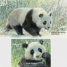 Endangered Species Giant Panda