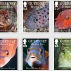 Guernsey Marine Life