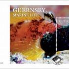Guernsey Marine Life- FDC (M/S)