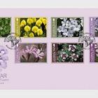 Gibraltar Endemic Flowers